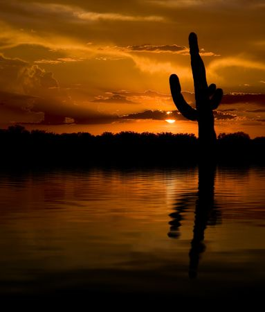 Saguaro reflecting in lake during sunset