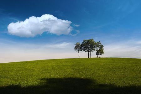 singly: A small group of young trees are standing on the top of a hill. There is a clear blue sky above and a big white cloud.