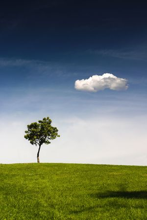 singly: A lonely tree is standing on the top of a hill. There is a clear blue sky above and a lonely white cloud. Stock Photo