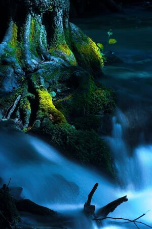 A running creek and a moss-grown tree. Stock Photo