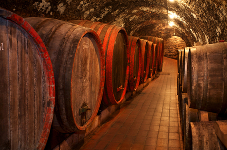 ferment: Wine barrels stacked in the old cellar of the winery. Stock Photo