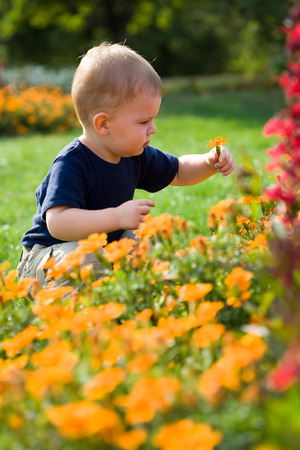 two years: Two years old  boy culls flowers. Stock Photo