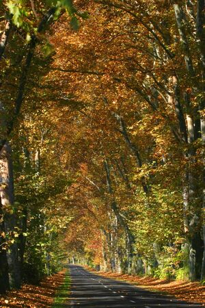 contryside: Road in an alley somewhere in the autumn contryside Stock Photo