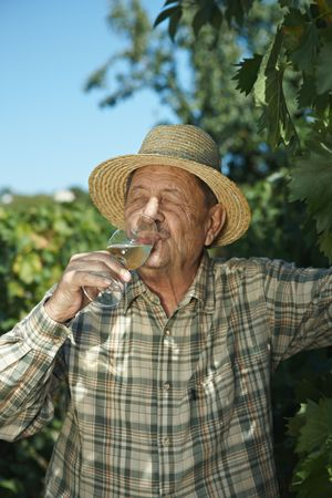 Senior vintner testing wine outdoors in vinery. photo