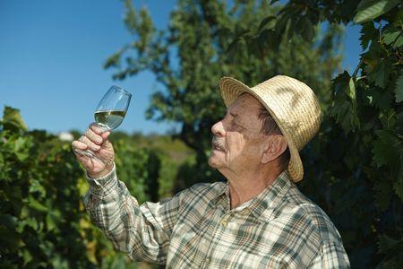 Senior vintner trying wine outdoors in vinery. photo