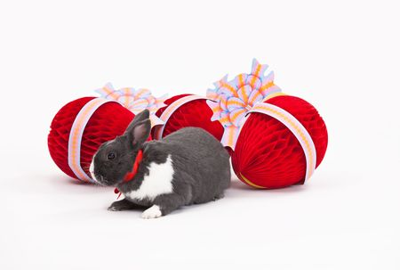 Easter bunny and Easter eggs isolated on white background. photo
