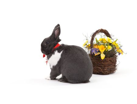 Easter bunny isolated on white background. Stock Photo - 6347733