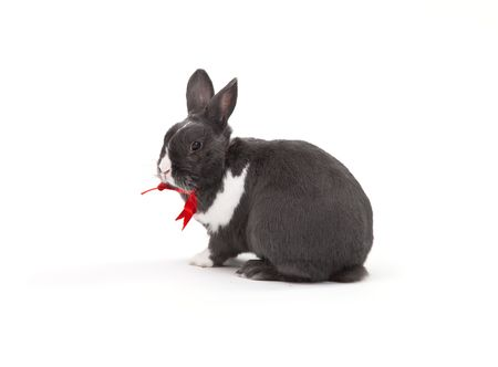 Easter bunny isolated on white background. photo