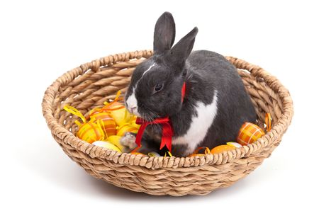 Easter bunny in basket isolated on white background. photo