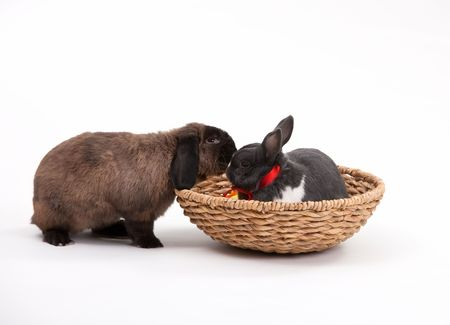 Easter bunnies isolated on white background. photo