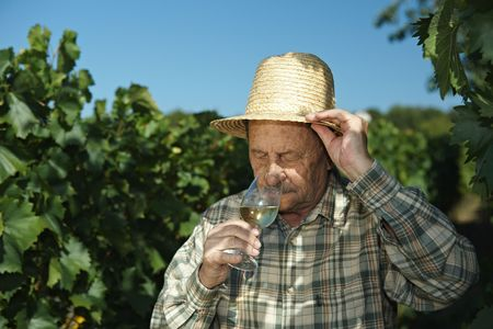 Senior winemaker testing wine outdoors in vinery. photo