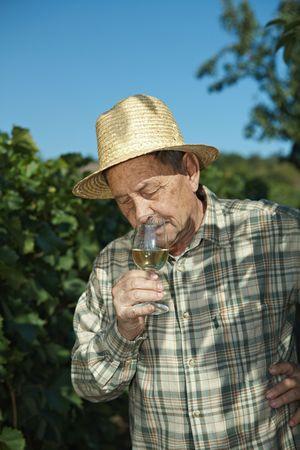 boater: Senior vintner testing wine outdoors in vinery. Stock Photo