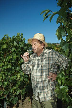 Senior vintner testing wine outdoors in vinery. photo