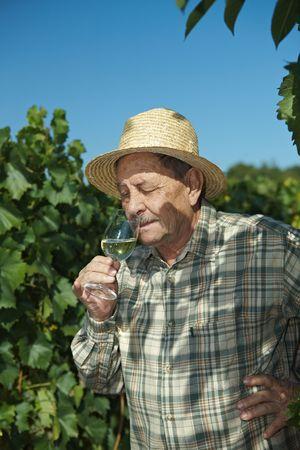 winemaker: Senior winemaker tasting wine outdoors in vinery.