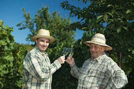 WWinemakers celebrating vintage outdoors in vinery. photo
