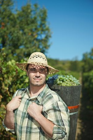 Vintager harvesting grapes to butt. Stock Photo - 6464860