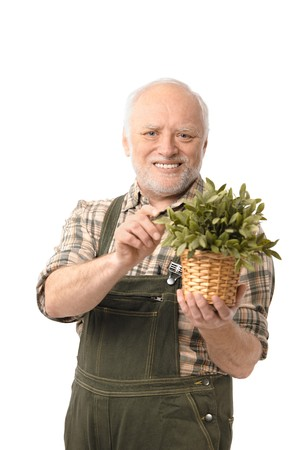 Cheerful elderly man holding plant smiling, white background. Stock Photo - 6941522