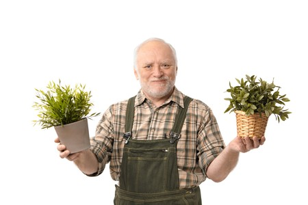 Senior gardener man holding plant smiling, white background. Stock Photo - 6941498