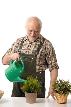 arroser plantes: Souriant vieil homme arrosage des plantes, isol� sur blanc.