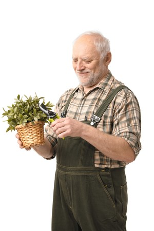 Cheerful elderly man taking care of plant, smiling, white background.
