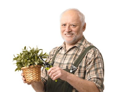 Elderly hobby gardener with plant and clippers, isolated on white.   photo