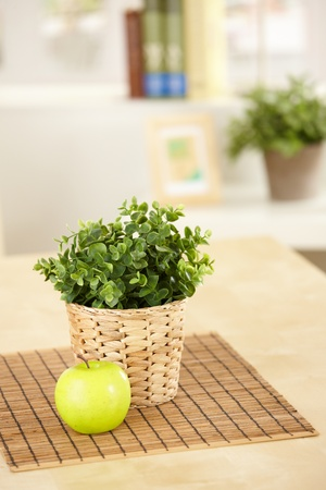potted plant: Green plant in holder and green apple on table, still life picture.