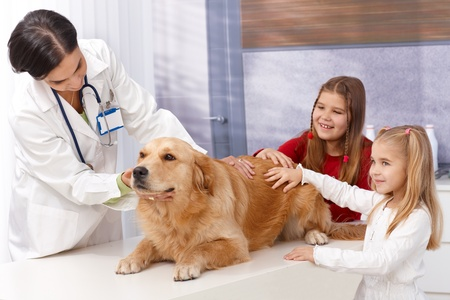 Little girls and golden retriever at pets' clinic during examination. Stock Photo - 13250590