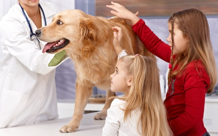 Little sisters and dog at veterinary surgeon, vet examining dog. photo