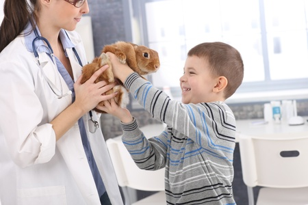 Laughing boy getting back cute pet rabbit from veterinary at pets clinic.