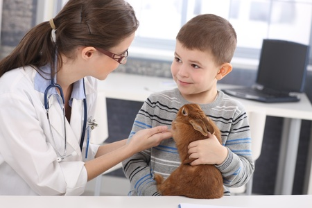 veterinarians: Veterinary and cute kid discussing rabbit treatment at pets clinic.