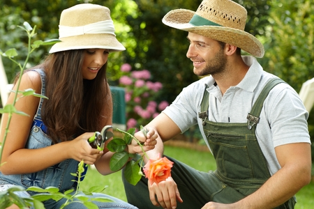 pruning scissors: Young couple gardening, woman clipping rose by pruning scissors.