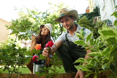 Happy couple taking care of roses in the garden, smiling. photo