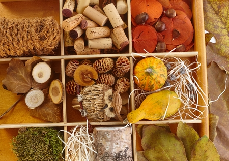 pineal: Autumn fruits, pineal, marrow, chestnut, leaves, cork, ropes, decor owl for creative artwork stored in wooden compartment.