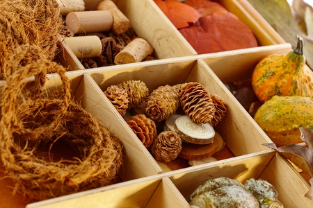 pineal: Autumn decoration ingredients for creative artwork in wooden compartment. Stock Photo