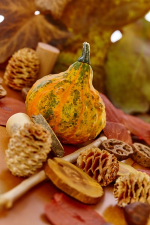 pineal: Selection of autumn decoration accessories with pineal, small marrow, leaves.