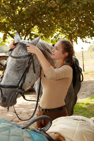 reins: Young woman putting on reins on horse over head. Stock Photo
