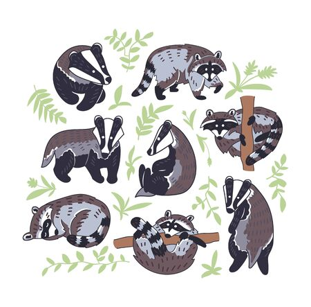 Badger and raccoon vector illustration. Hand drawn set of сute animal characters in different poses with leaves.