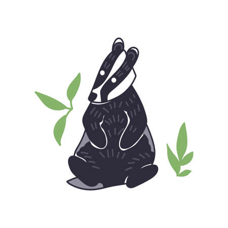 Badger vector illustration. Hand drawn cute Meles meles sitting with leaves.