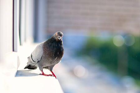 city pigeon sitting on a window
