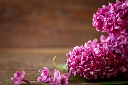 Branch of lilac lying on a brown wooden background. Stock Photo