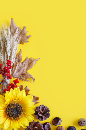 Yellow autumn background. Autumn harvest festival.
