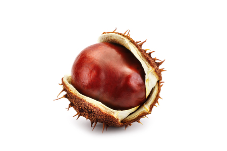 Chestnuts with peel on white background. An isolated object.