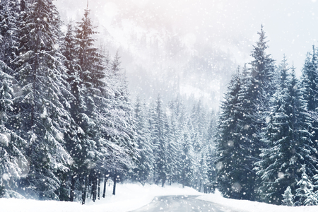 Beautiful snow-covered fir-trees in the Alpine mountains.