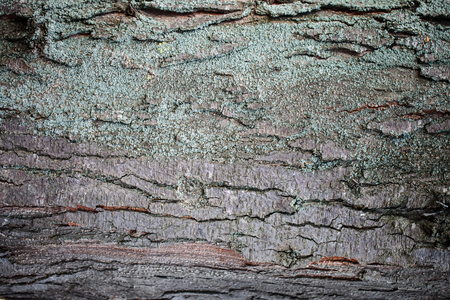 Texture of bark of a tree, Abstract background. Stock Photo