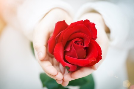I love you Mom, Mothers Day. Red rose in hands of the little girl, Selective focus. Foto de archivo