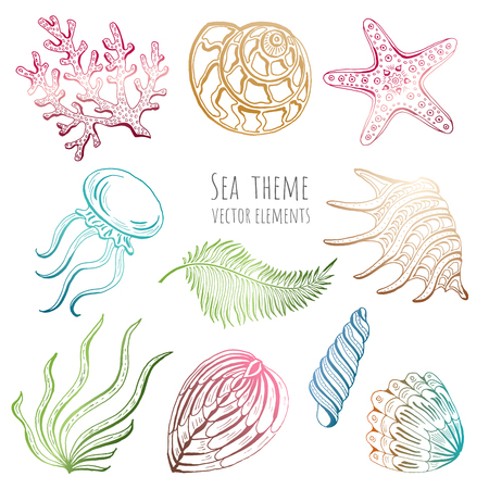 Set of vector seashells, starfish and jellyfish on white background for design. Vector illustration.