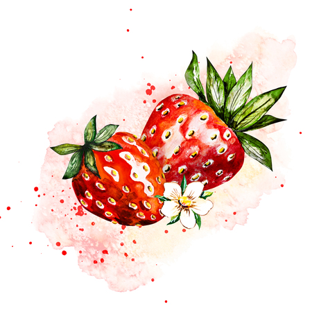 Hand drawn watercolor painting strawberry on white background. Illustration of berries.