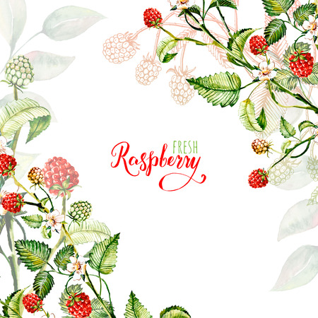 Composition of raspberry berries. Watercolor drawing handmade. Template, frame. Stock Photo