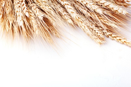 Wheat on white background. Isolated. Happy Thanksgiving Day. Harvest festival. The view from the top. Horizontal. Stock Photo