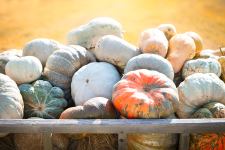 Big pile of pumpkins on hay in a wooden cart the season of harvest. Happy Thanksgiving Day. Harvest festival.